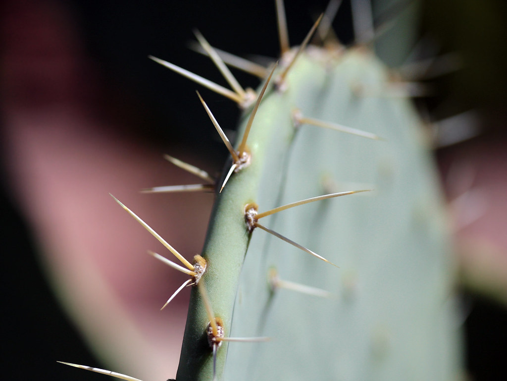 Regalar un cactus es una aventura.