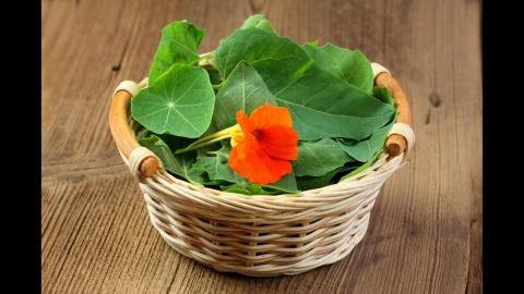 flores comestibles para tus comi 480x270 - Flores comestibles para tus comidas