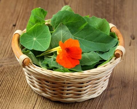 flores comestibles para tus comi