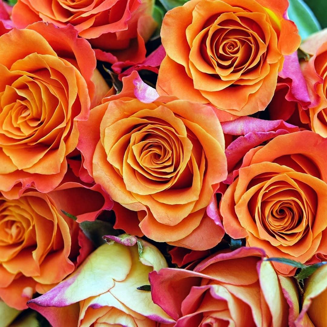 florpaxi.roses 82735888 645881499496229 893367102602472787 n 1