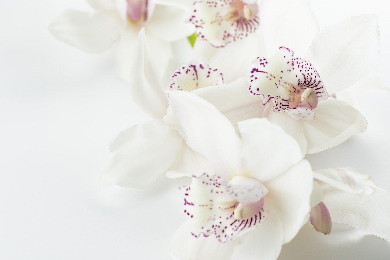orquídeas 1579944730 - Los mosquitos y mosquitas se pierden por las orquídeas...